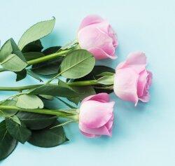 qual é o coletivo de flores