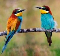 qual é o coletivo de pássaros
